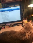 Rachel and her cat on keyboard